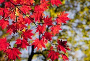 Oto, widzisz, znowu idzie jesień.....